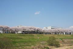東京理科大学薬学部